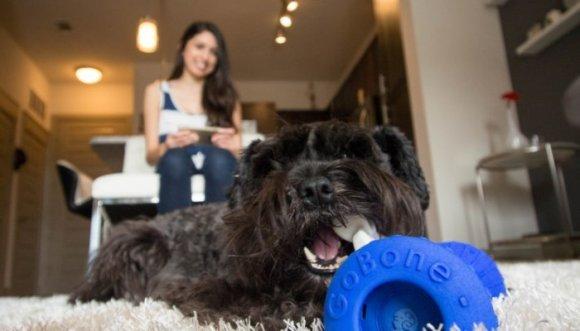 Tecnología al servicio de tu perro, llego el GoBone