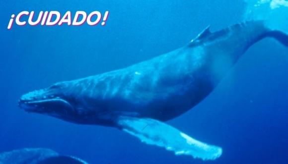 ¿De qué se trata el juego de la ballena azul?