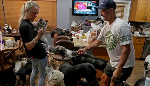 Salvaron a 46 animales durante el Huracán Irma