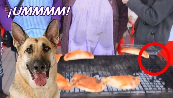 Cámara captó al perro ladrón de empanadas en vivo