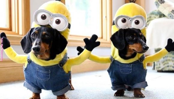 Disfraces terroríficamente tiernos para perros