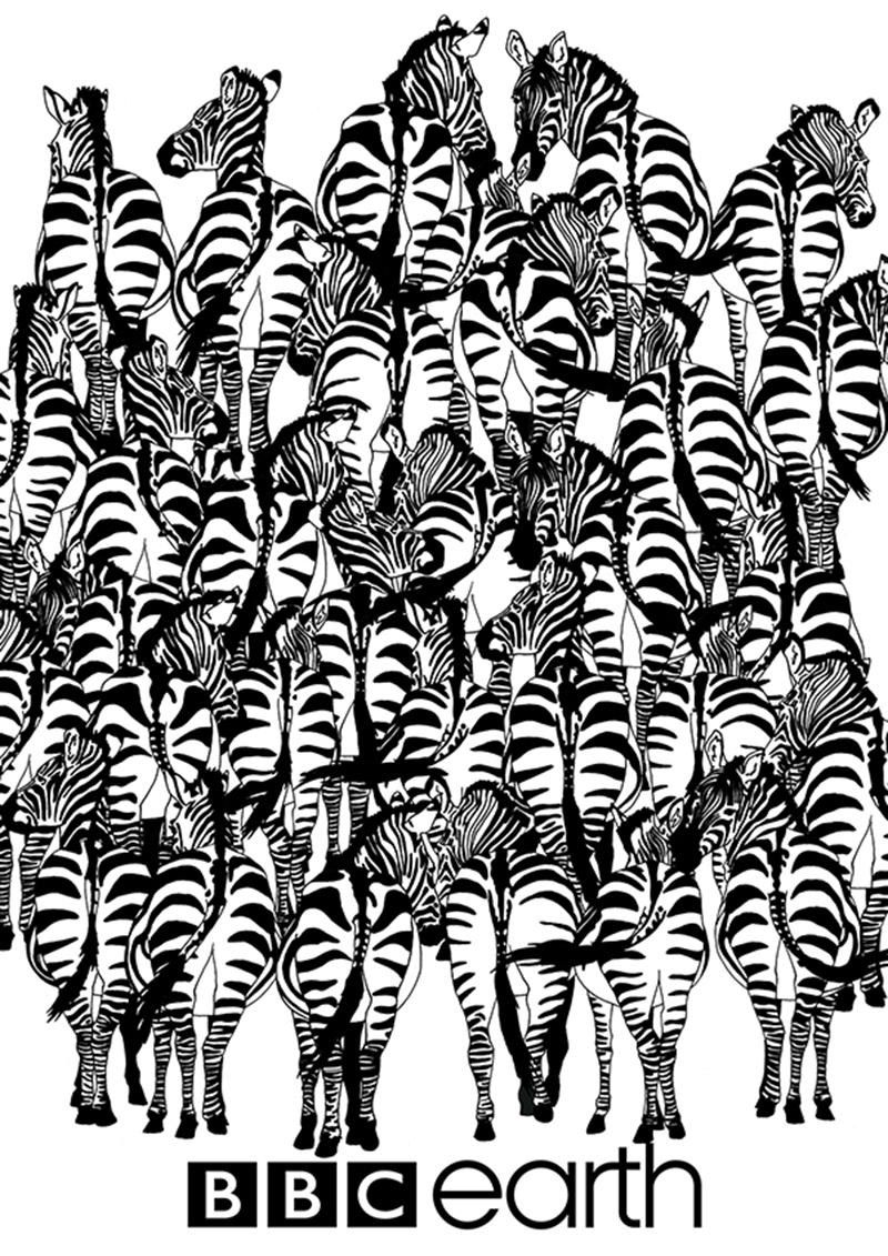 cebras1
