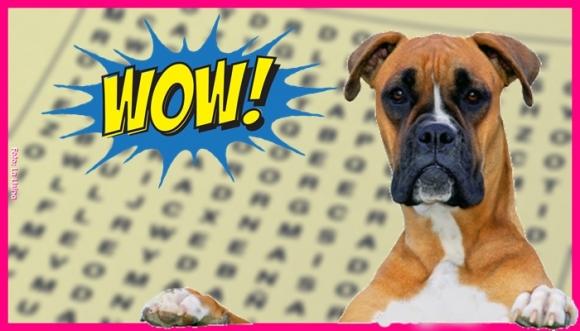 Reto viral: Busca el DOG en la sopa de letras
