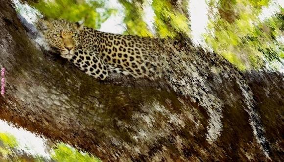Reto visual: Busca al leopardo en esta foto