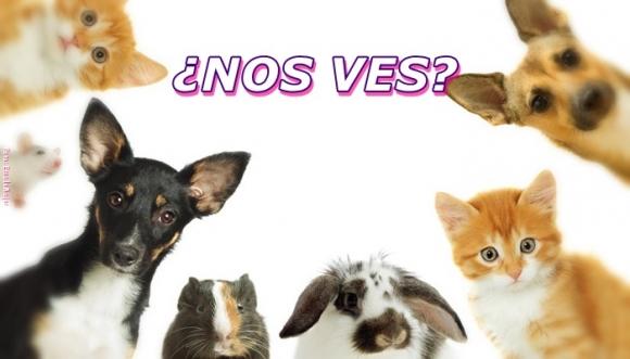 Se nos perdieron 5 animales, ¿nos ayudas a buscarlos? Reto
