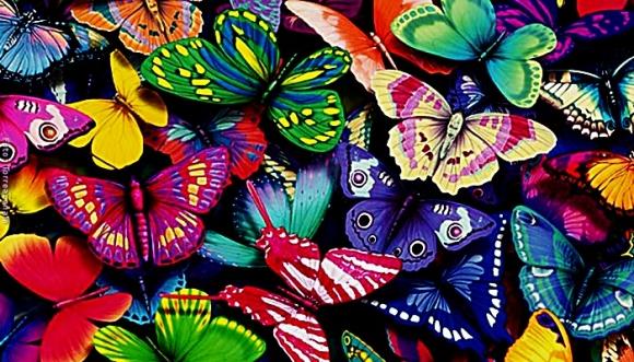 La mariposa de tu mes tiene un rasgo de tu personalidad