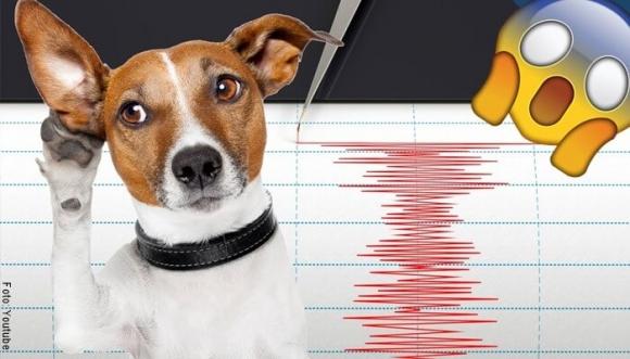 ¿Los animales presienten los temblores?