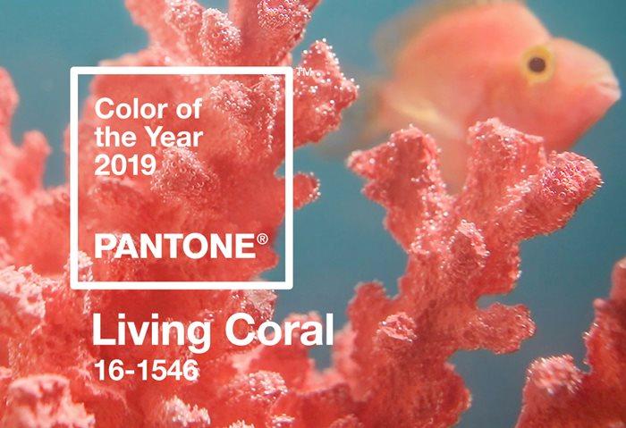Foto de Living Coral, color Pantone para 2019
