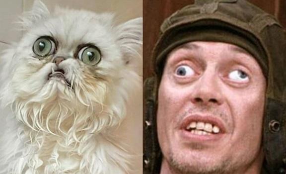 ¿Este es el gato más feo del mundo? ¡Pobrecito!