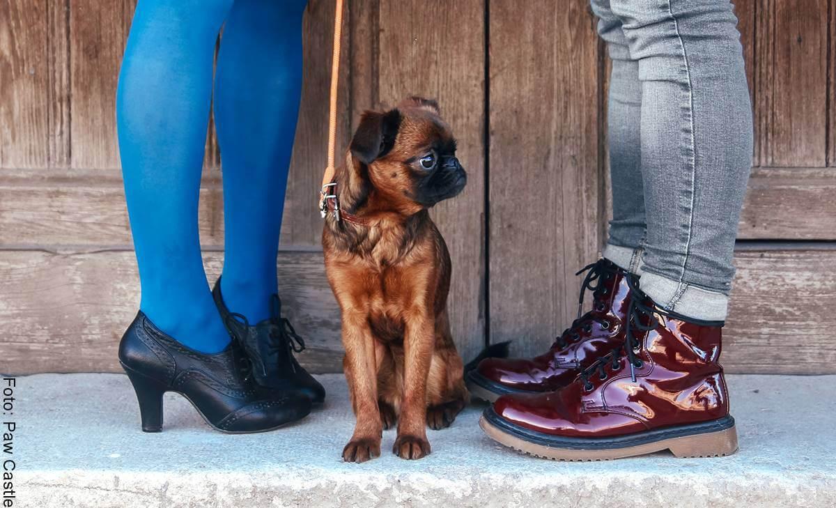 ¿Y la mascota tras un divorcio? Custodia de un perro en Colombia