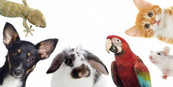Temas de conversación divertidos: fotos de varios animales