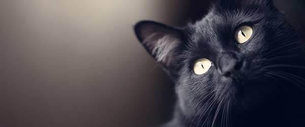 Foto de primer plano de un gatito