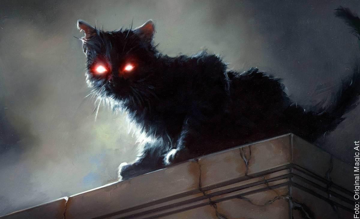 Soñar con un gato negro: ¿cuál es su significado?