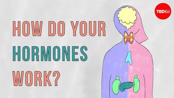 Imagen de lo que hacen las hormonas