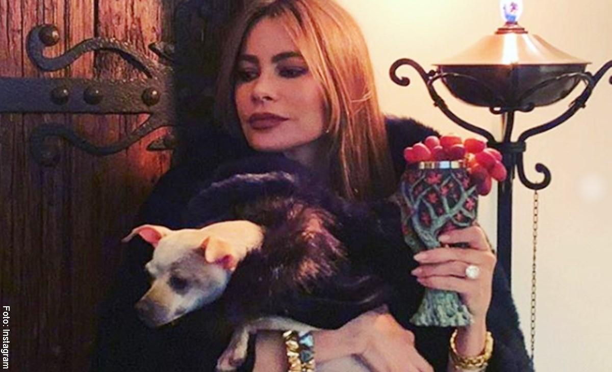 """""""Lleno de lujos"""" así fue el cumpleaños de 'Baguette', la mascota de Sofía Vergara"""