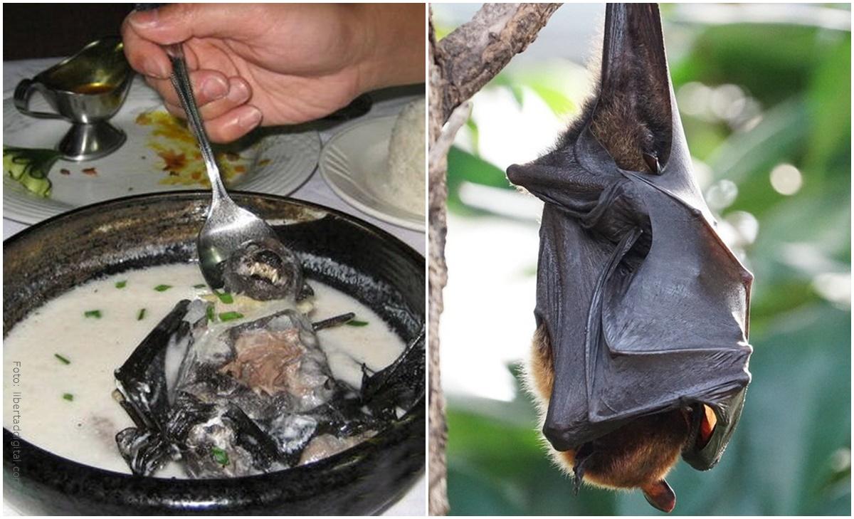 ¿Sopa de murciélago originaría el coronavirus?