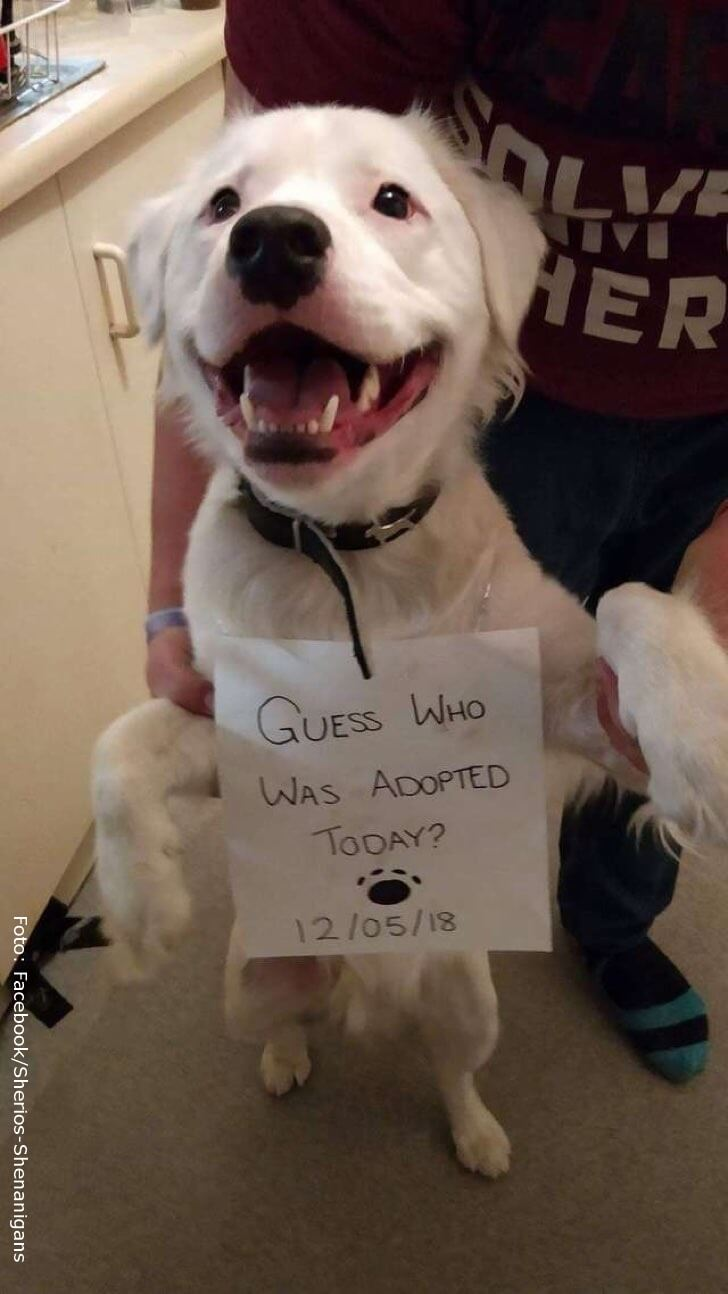 Shiro, el perrito ciego y sordo recién adoptado.
