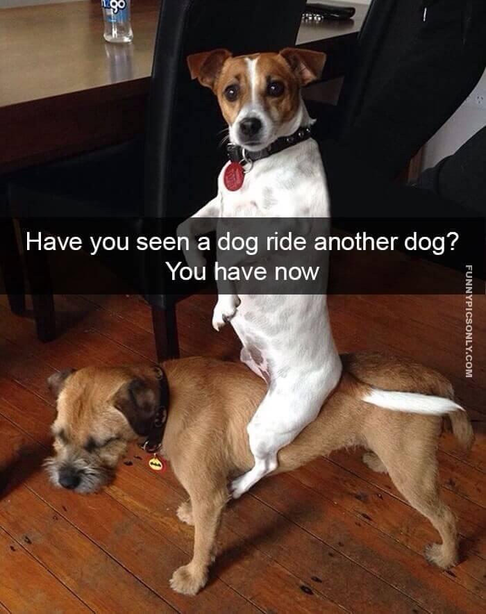 Foto de un perro montado sobre otro perro