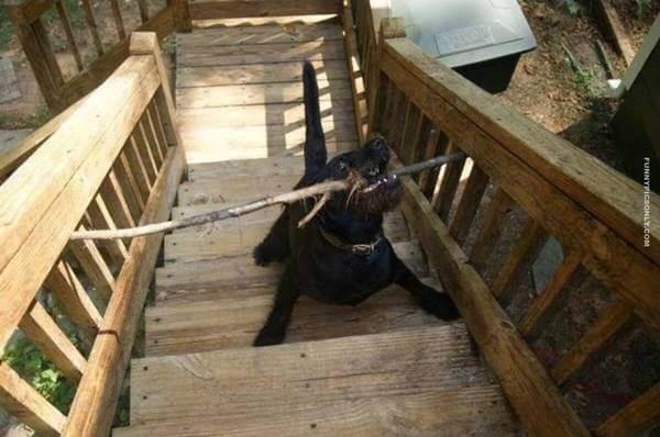 Foto de un perro con un palo en la boca atascado en una escalera con baranda