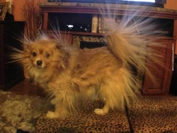 Foto de un perro con estática en el pelo