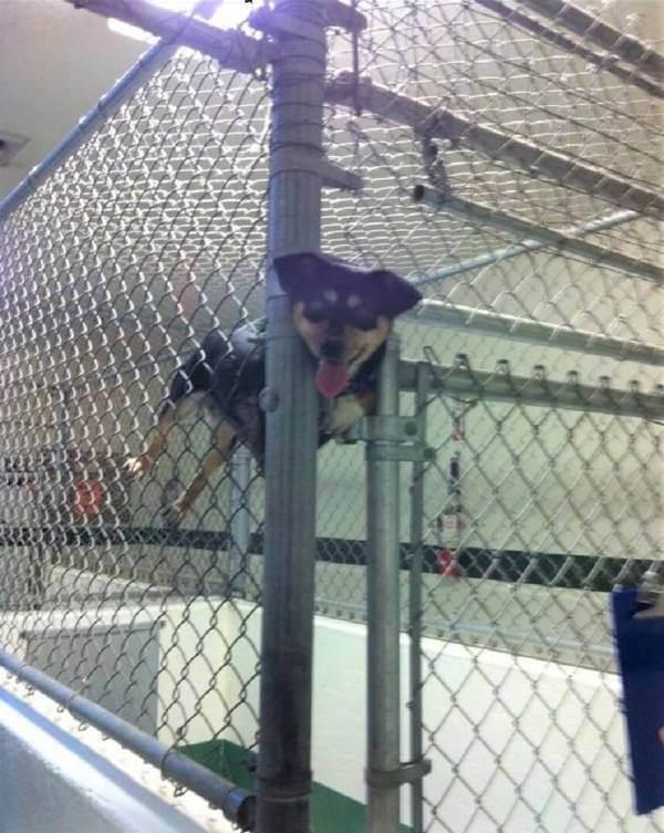 Foto de un perro atascado en una reja