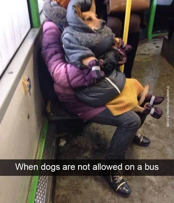 Foto de un perro vestido de persona como un niño