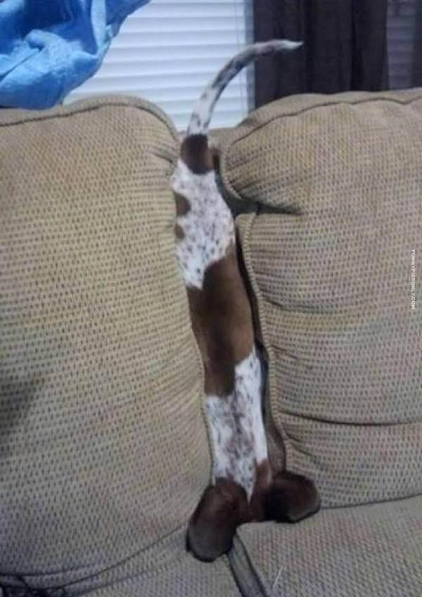 Foto de un perro en la división de un sofá