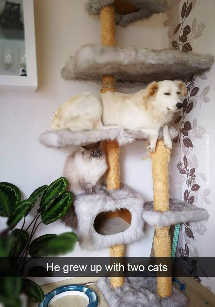 Foto de un perro en el gimnasio de un gato