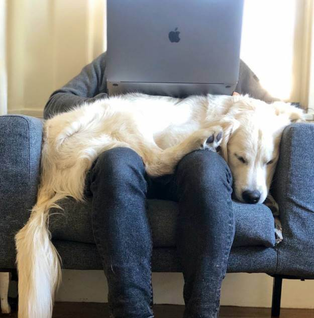 Foto de un computador sobre un perro