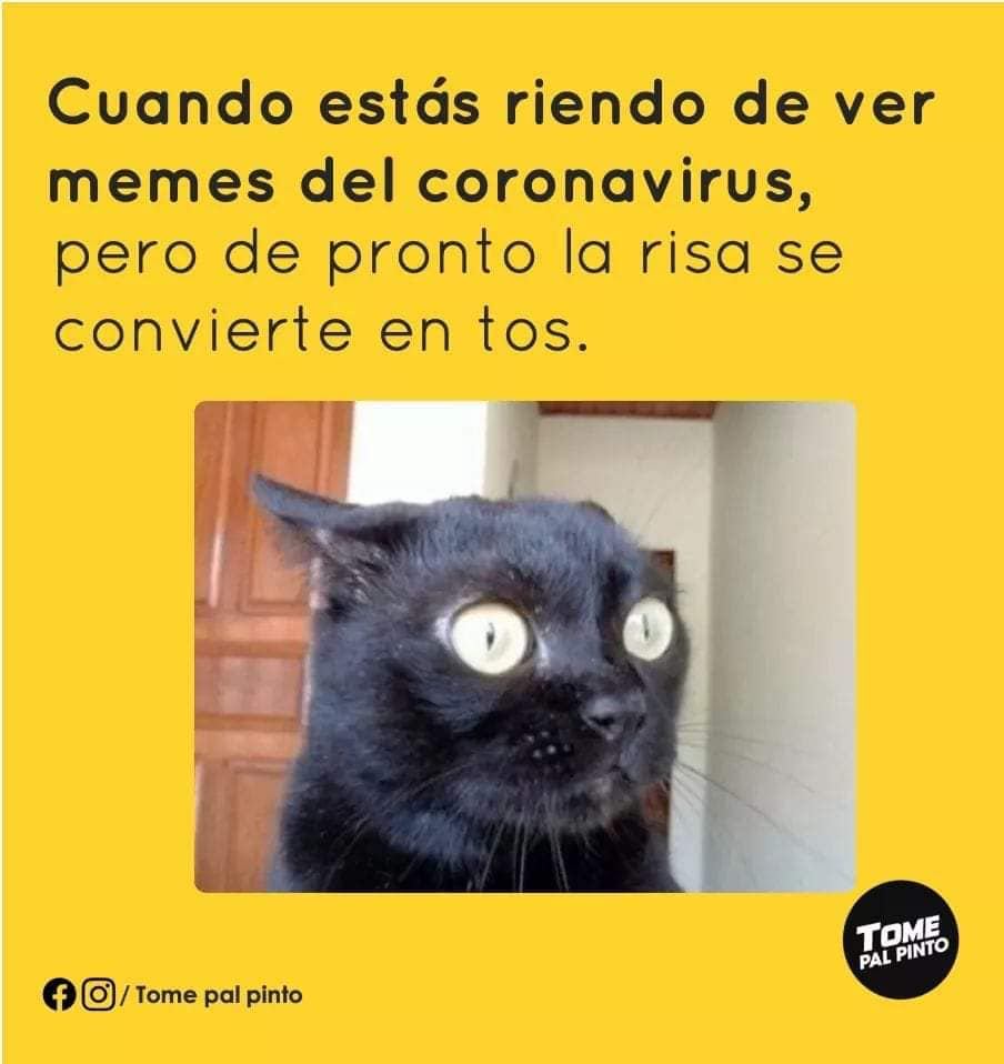Meme del gato asustado