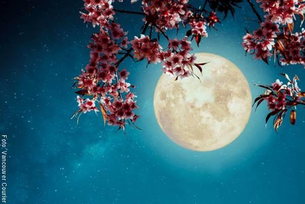 Ilustración de una luna llena con flores
