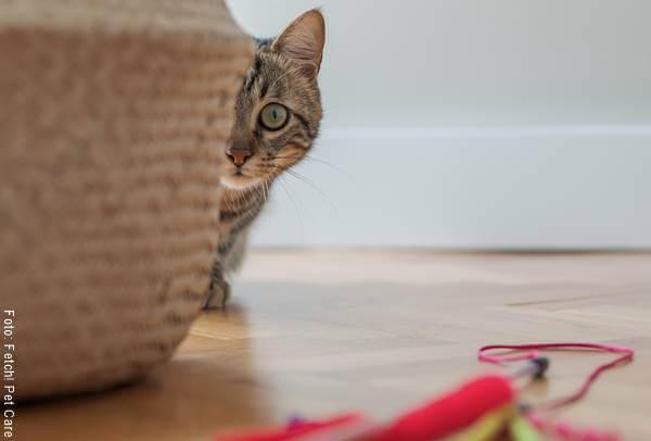 Foto de un gato jugando con un juguete