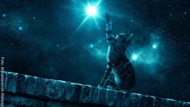 Soñar con gatos tiene un significado sorprendente