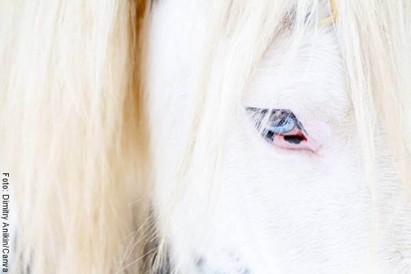 Foto de un equino blanco para ejemplificar el significado de soñar con caballos