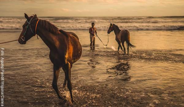 Foto de dos caballos sobre el agua