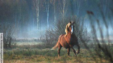 Soñar con caballos es algo muy común y significa esto