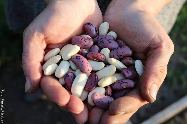 Foto de fríjoles para ilustrar los alimentos ricos en biotina