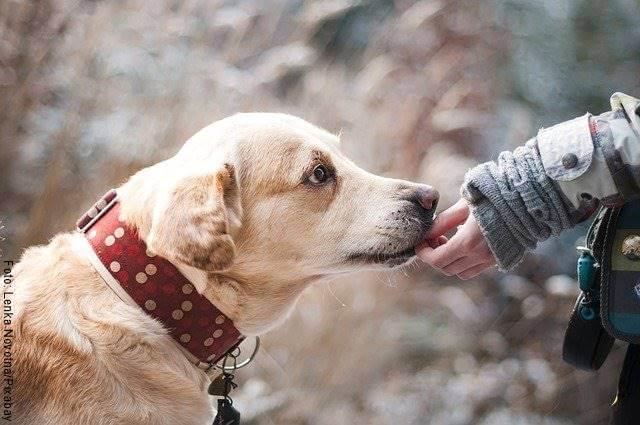 Foto de un perro lamiendo la mano de su dueña