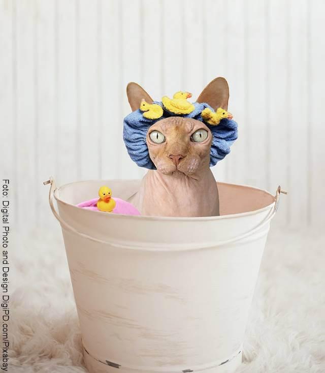 Foto de un gato con gorro de baño