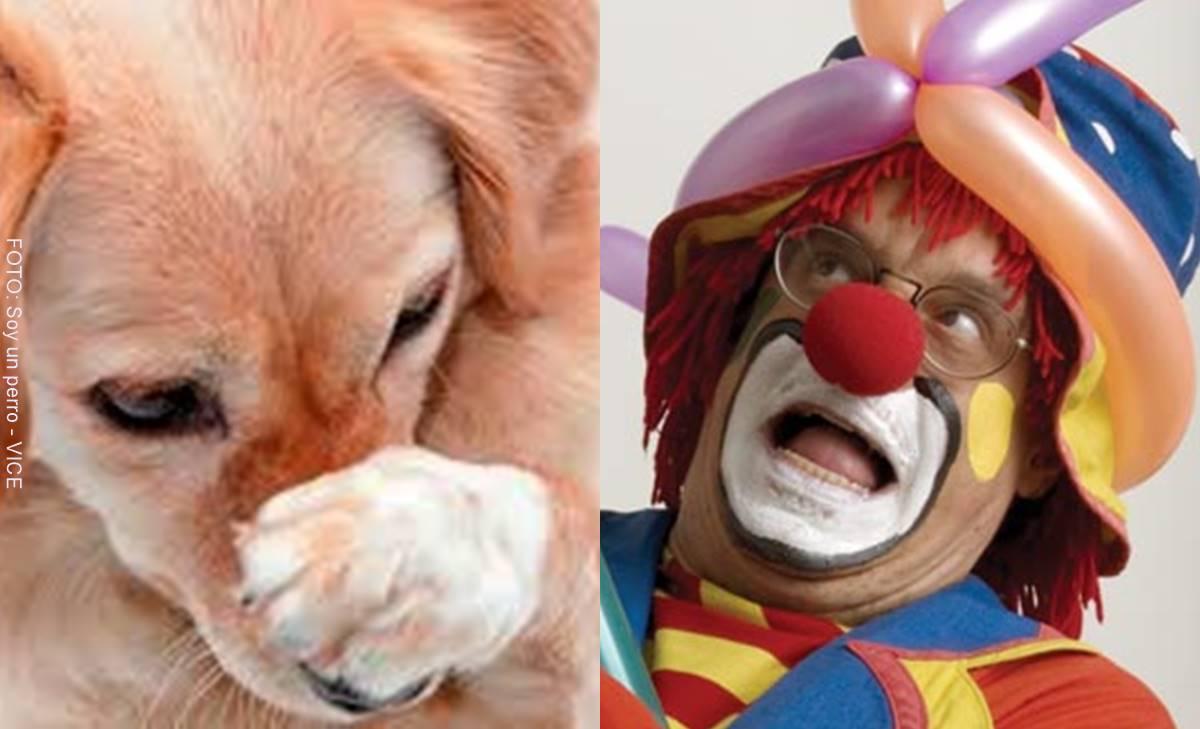 ¡Qué miedo! ¿Será un perro o un payaso? Reto viral