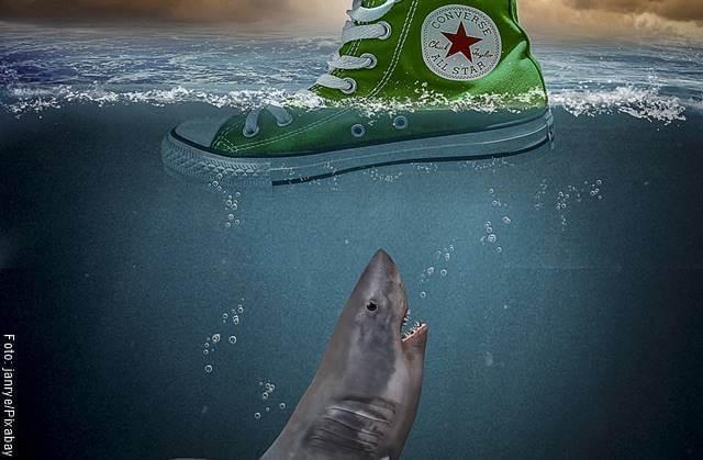 Imagen de un tiburón y un zapato flotando en el agua