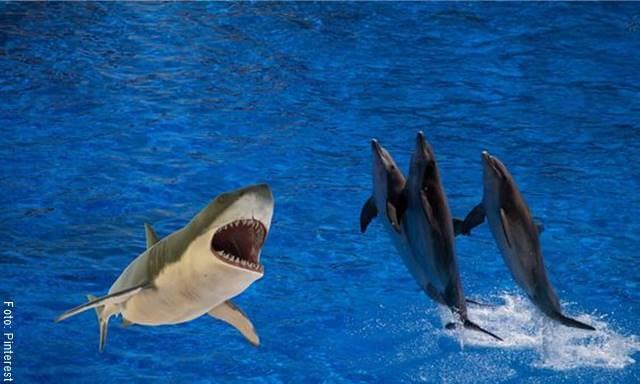 Imagen de varios delfines y un tiburón