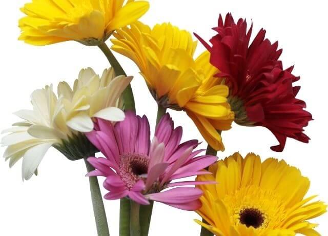 Foto de 6 flores