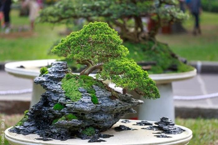 Foto de una planta para ilustrar los cuidados de un bonsái