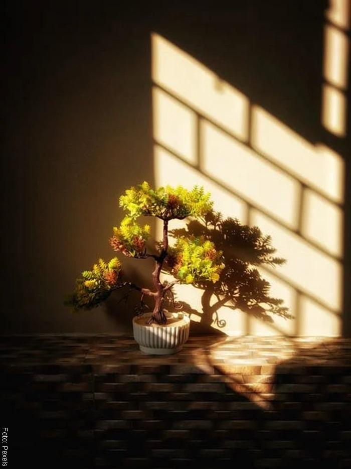 Foto de un bonsái a la sombra