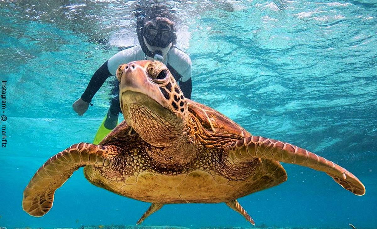 """Tortuga le hizo """"pistola"""" a un buzo bajo el mar"""