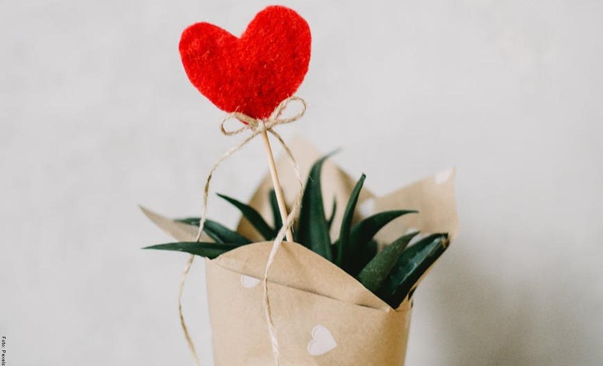 ¡Aloe vera! Cuidados para una planta milagrosa