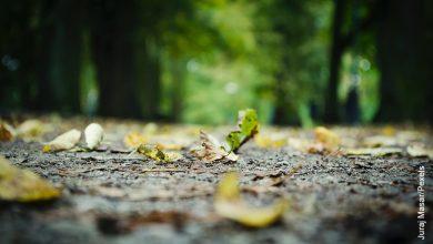 Foto de unas hojas de árbol en el suelo que muestra cómo cuidar el suelo