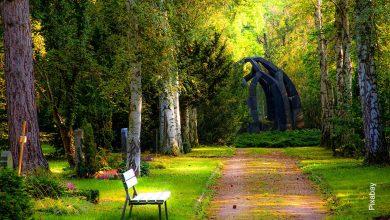 Foto de un bosque con una silla en medio