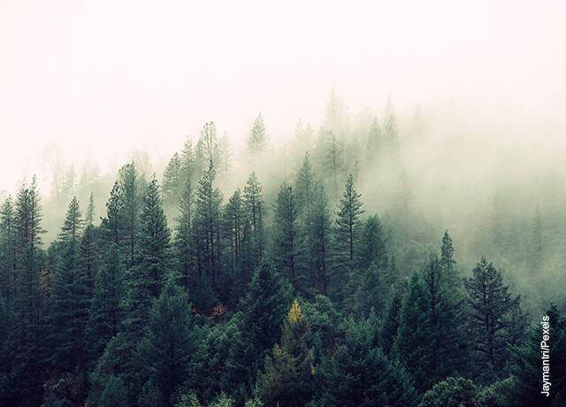Foto de un bosque de niebla que ilustras cómo cuidar los árboles